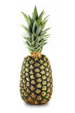 Pojedynczy ananas odizolowywający na bielu Zdjęcie Stock