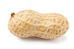 Pojedynczy arachid Obraz Royalty Free