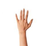 pojedynczy białe ręce tło Fotografia Royalty Free