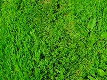 pojedynczy białe tło trawy Zdjęcia Stock