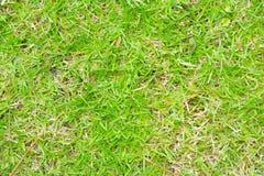 pojedynczy białe tło trawy Fotografia Stock