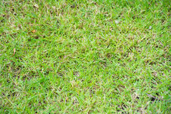 pojedynczy białe tło trawy Zdjęcie Royalty Free