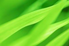 pojedynczy białe tło trawy obrazy stock