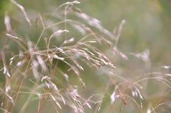 pojedynczy białe tło trawy Obraz Stock