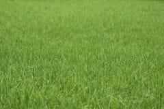 pojedynczy białe tło trawy Zdjęcie Stock