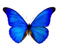 pojedynczy białego motyla Motyl na biały tle Fotografia Royalty Free