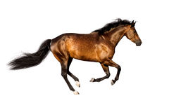 pojedynczy białego konia Obrazy Stock