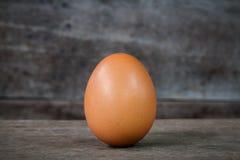 Pojedynczy brown kurczaka jajko Fotografia Royalty Free