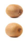 Pojedynczy cały kiwifruit odizolowywający Zdjęcia Stock