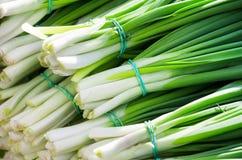 pojedynczy cebulkowy white wiosna Zdjęcie Royalty Free