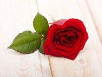 Pojedynczy czerwieni róży kwiat Zdjęcie Royalty Free