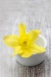 Pojedynczy daffodil kwiat w białym ceramicznym garnku Obrazy Royalty Free