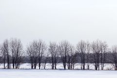 Pojedynczy drzewa w polu Zima Fotografia Royalty Free