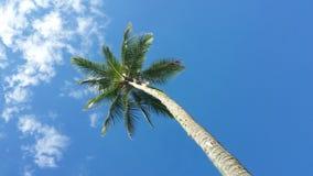Pojedynczy drzewko palmowe przeciw niebieskiemu niebu i chmurom Obrazy Stock