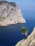 Pojedynczy drzewko palmowe przy falezą nad głęboki błękitny morze Zdjęcia Royalty Free