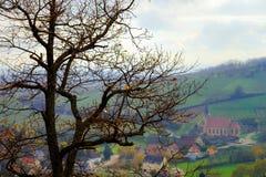 Pojedynczy drzewny sylwetki jesieni dzień Zdjęcie Stock