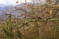 Pojedynczy drzewny sylwetki jesieni dzień Fotografia Royalty Free