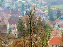 Pojedynczy drzewny sylwetki jesieni dzień Zdjęcia Royalty Free
