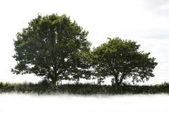 pojedynczy drzewo Obraz Royalty Free