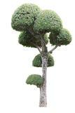 pojedynczy drzewo zdjęcie royalty free