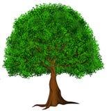 pojedynczy drzewo Zdjęcie Stock