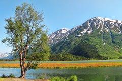 Pojedynczy drzewo Blisko jeziora Fotografia Royalty Free