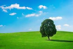 Pojedynczy drzewo, drzewo w polu Fotografia Royalty Free