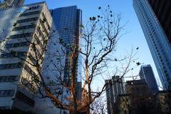 Pojedynczy drzewo i budynki Zdjęcia Royalty Free