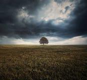 Pojedynczy drzewo i burz chmury zdjęcia royalty free