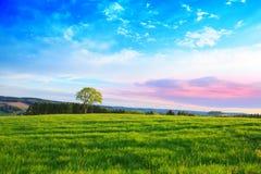 Pojedynczy drzewo i niebieskie niebo Obrazy Royalty Free