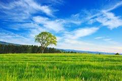 Pojedynczy drzewo i niebieskie niebo Zdjęcia Royalty Free
