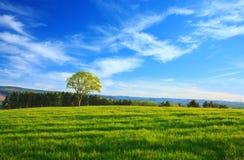Pojedynczy drzewo i niebieskie niebo Obraz Royalty Free