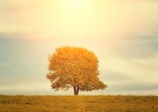 Pojedynczy drzewo na łące w jesień krajobrazie pod niebieskim niebem z chmurami Obrazy Stock