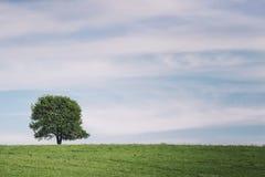 Pojedynczy drzewo na łące w lato krajobrazie pod niebieskim niebem z chmurami Zdjęcia Royalty Free