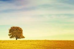 Pojedynczy drzewo na łąkowy pełnym kwiaty w jesień krajobrazie pod niebieskim niebem z chmurami Fotografia Royalty Free