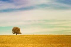 Pojedynczy drzewo na łąkowy pełnym kwiaty w jesień krajobrazie pod niebieskim niebem z chmurami Zdjęcia Stock