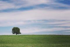 Pojedynczy drzewo na łąkowy pełnym kwiaty w lato krajobrazie pod niebieskim niebem z chmurami Zdjęcia Royalty Free