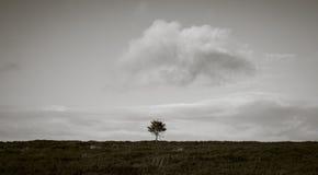 Pojedynczy drzewo na cumuje Obrazy Royalty Free