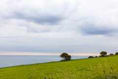 Pojedynczy drzewo na falezie Obrazy Royalty Free