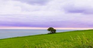 Pojedynczy drzewo na falezie Zdjęcie Stock