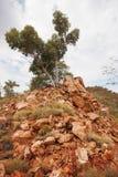 Pojedynczy drzewo na Skalistym wychodzie Fotografia Royalty Free