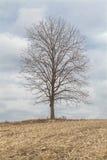 Pojedynczy drzewo na wzgórzu Obrazy Royalty Free