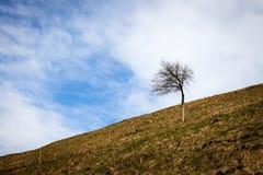 Pojedynczy drzewo na wzgórzu Fotografia Stock