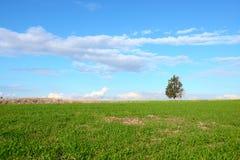 Pojedynczy drzewo na zielonym polu Zdjęcie Stock