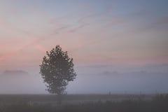 Pojedynczy drzewo przeciw ranku niebu Zdjęcia Royalty Free