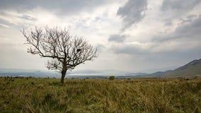 Pojedynczy drzewo przed Loch Lomond Zdjęcie Royalty Free