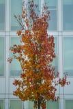 Pojedynczy drzewo przed nowożytnym budynkiem biurowym obraz royalty free