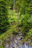 Pojedynczy drzewo przy krawędzią skała Fotografia Royalty Free