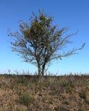 Pojedynczy drzewo przy stroną osamotniona żwir droga Fotografia Stock