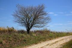 Pojedynczy drzewo przy stroną osamotniona żwir droga Zdjęcie Royalty Free